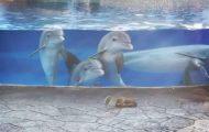 Δελφίνια βλέπουν σκίουρους για πρώτη φορά