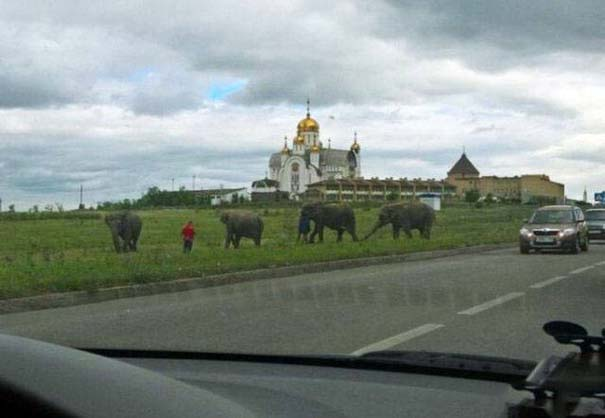 Εν τω μεταξύ, στη Ρωσία... #146 (3)
