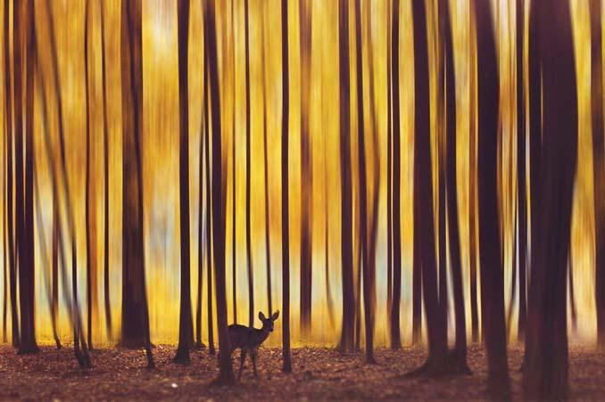 Φωτογράφος απαθανατίζει το Φθινόπωρο σε διάφορα σημεία του κόσμου (13)