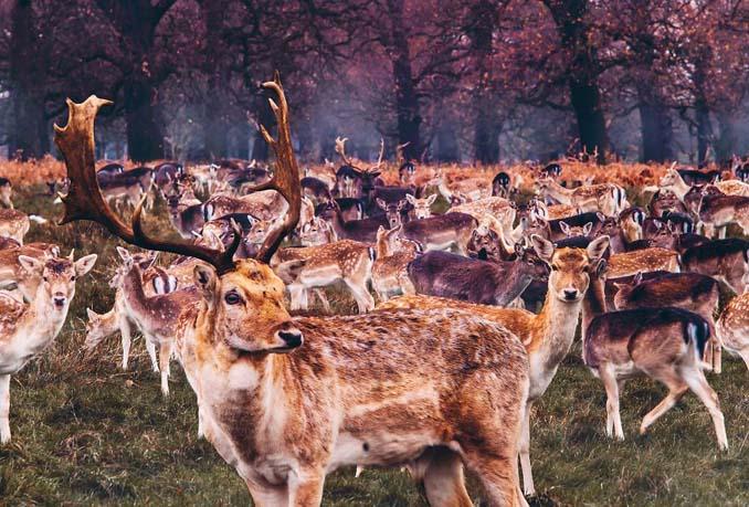 Φωτογράφος απαθανατίζει το Φθινόπωρο σε διάφορα σημεία του κόσμου (3)