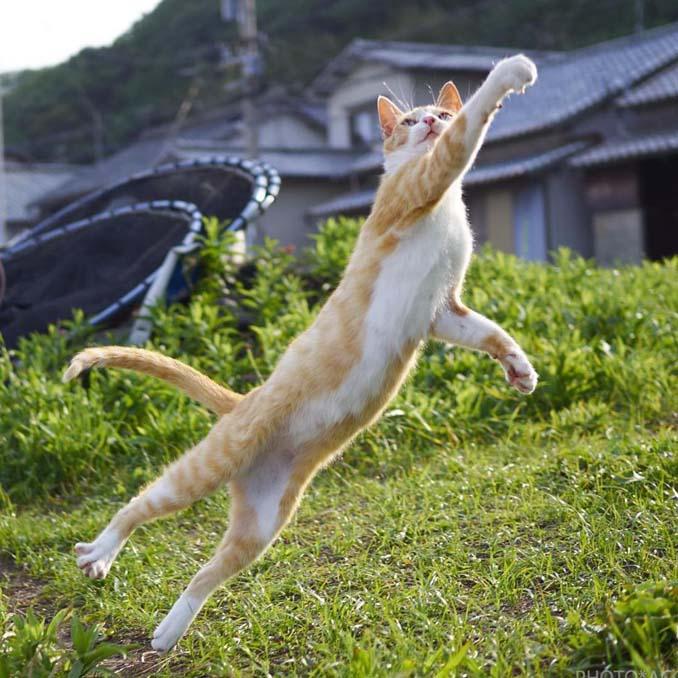 Φωτογράφος απαθανατίζει γάτες Ninja (2)
