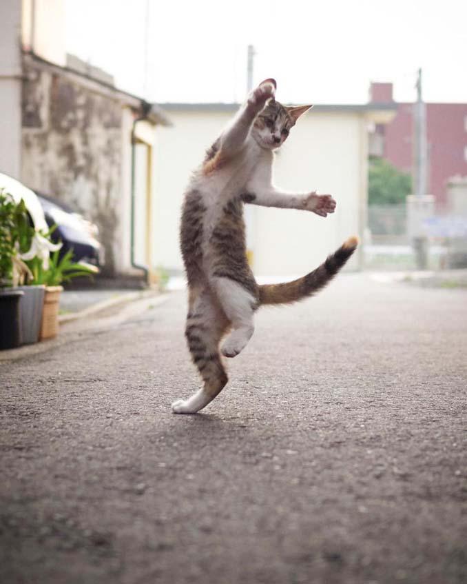 Φωτογράφος απαθανατίζει γάτες Ninja (6)