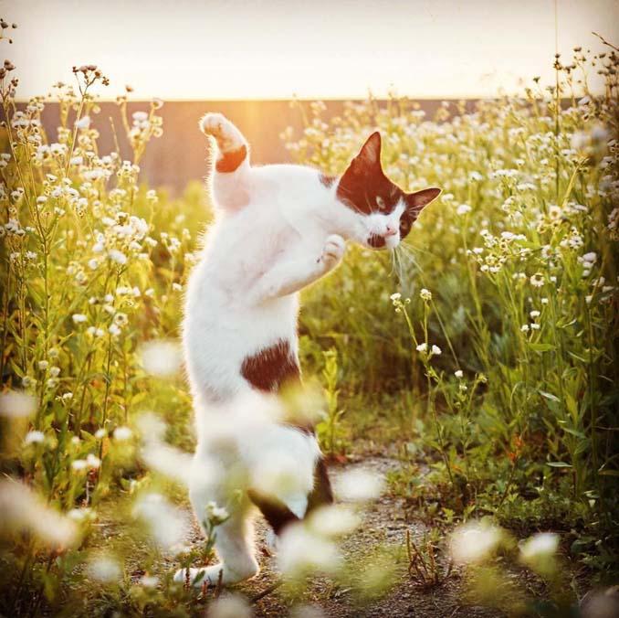 Φωτογράφος απαθανατίζει γάτες Ninja (7)