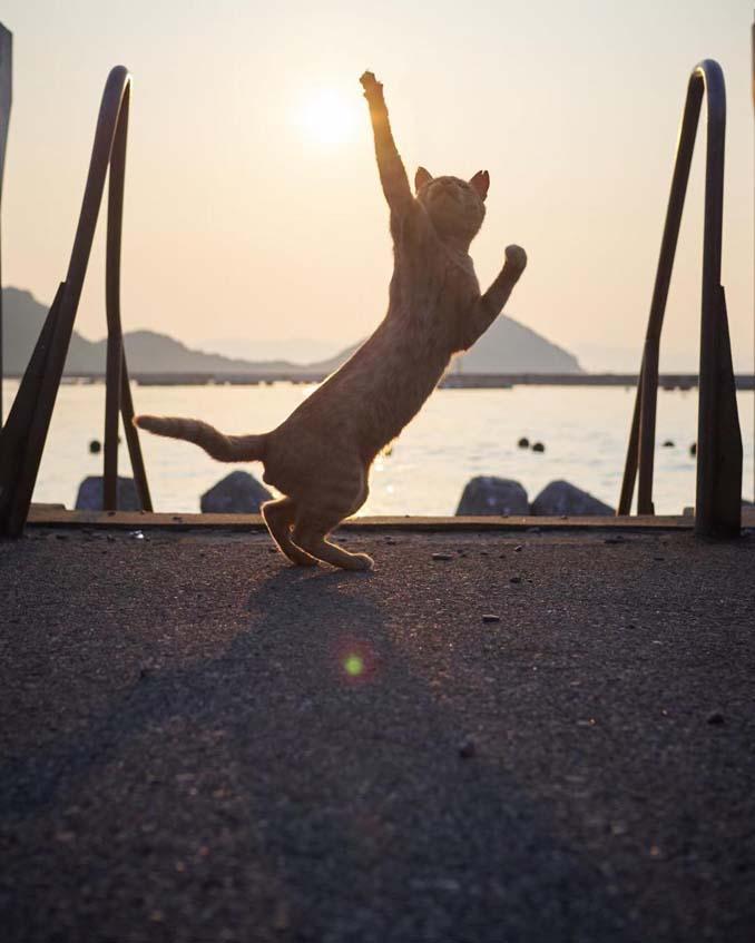 Φωτογράφος απαθανατίζει γάτες Ninja (8)
