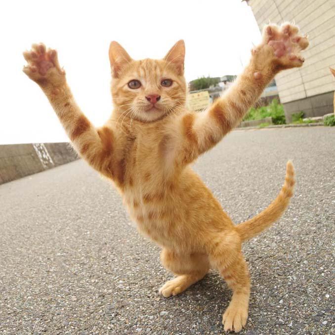 Φωτογράφος απαθανατίζει γάτες Ninja (9)