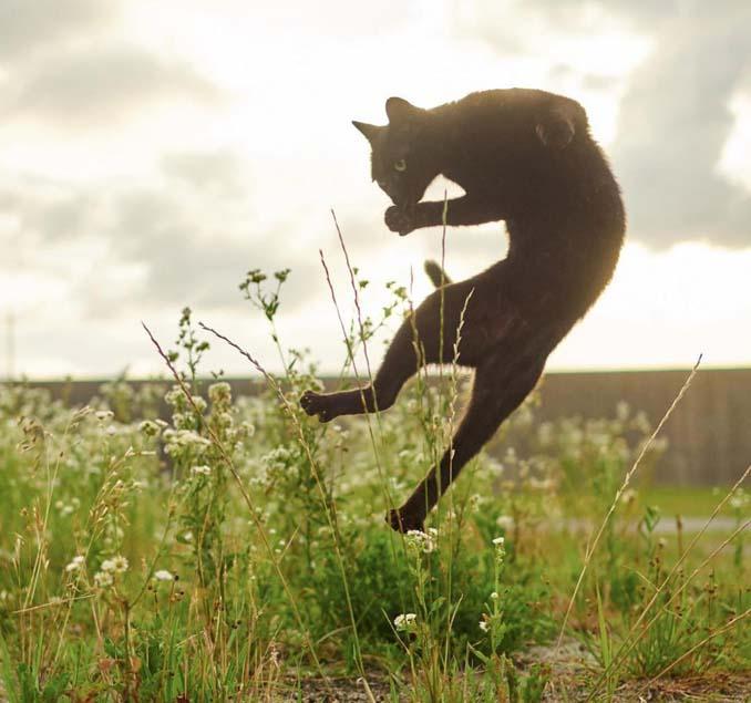 Φωτογράφος απαθανατίζει γάτες Ninja (10)