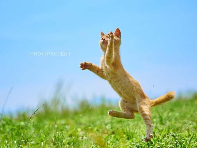 Φωτογράφος απαθανατίζει γάτες Ninja (12)