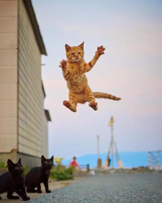 Φωτογράφος απαθανατίζει γάτες Ninja (13)