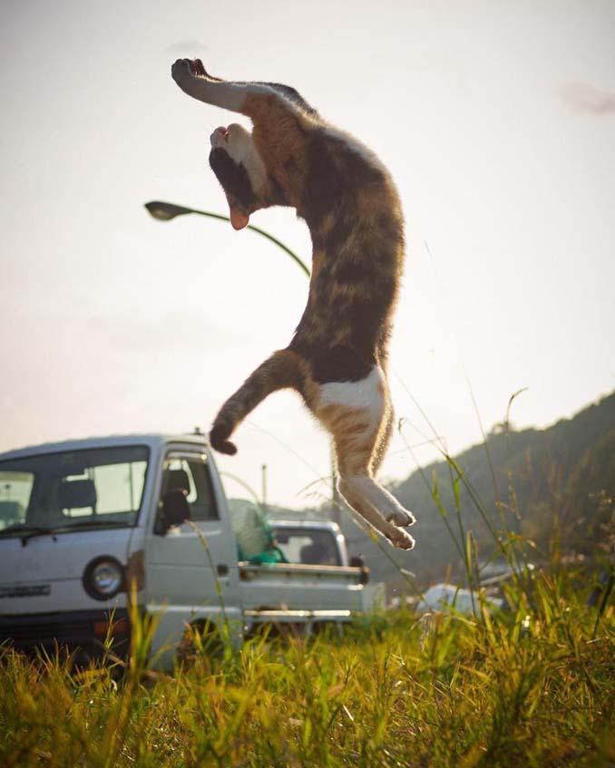 Φωτογράφος απαθανατίζει γάτες Ninja (14)