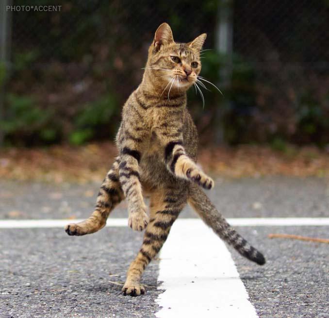 Φωτογράφος απαθανατίζει γάτες Ninja (15)