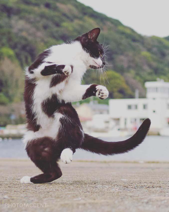 Φωτογράφος απαθανατίζει γάτες Ninja (17)