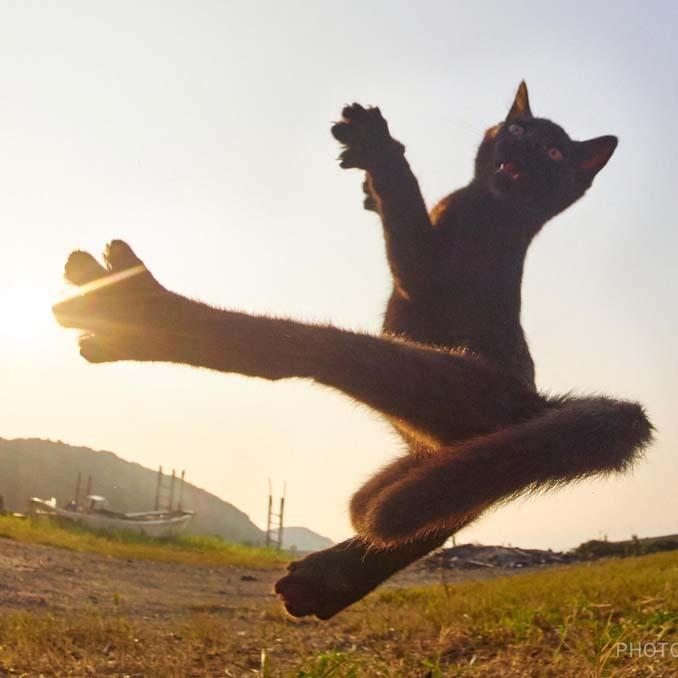 Φωτογράφος απαθανατίζει γάτες Ninja (19)