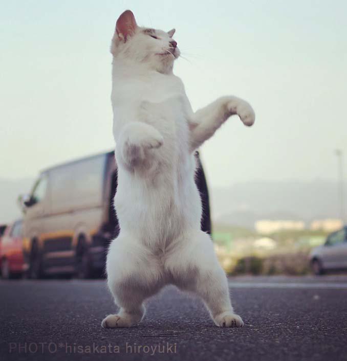 Φωτογράφος απαθανατίζει γάτες Ninja (20)