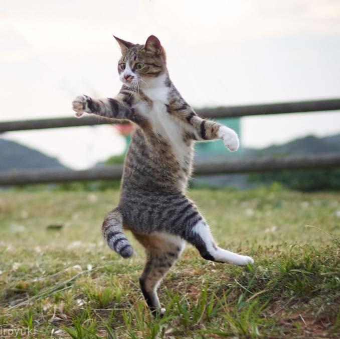 Φωτογράφος απαθανατίζει γάτες Ninja (21)