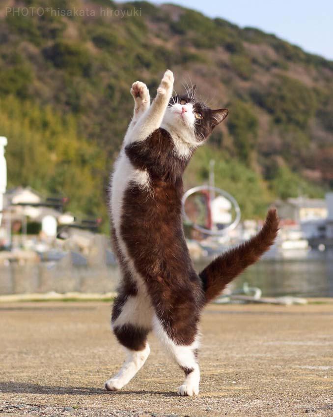 Φωτογράφος απαθανατίζει γάτες Ninja (22)