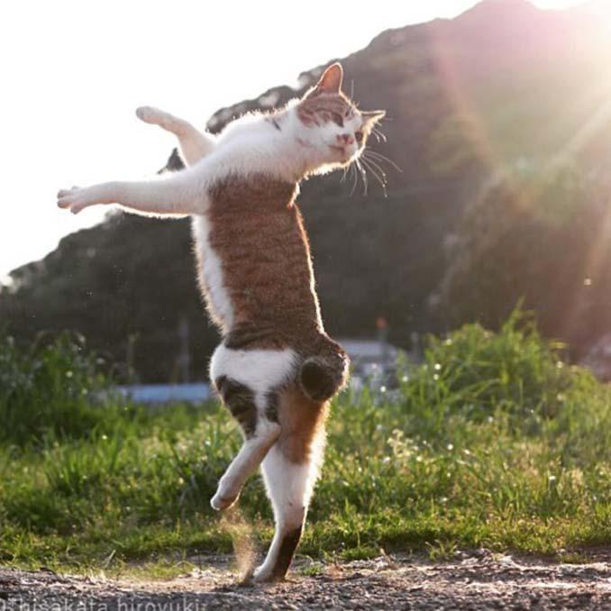 Φωτογράφος απαθανατίζει γάτες Ninja (23)