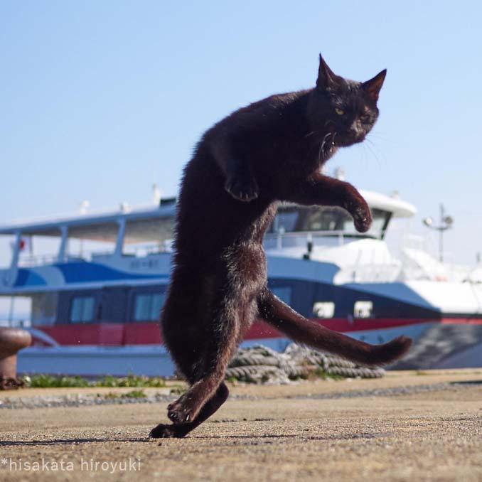 Φωτογράφος απαθανατίζει γάτες Ninja (24)
