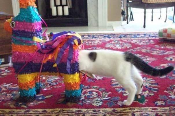 Γάτες που... κάνουν τα δικά τους! #67 (2)