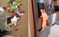 Γάτες που... κάνουν τα δικά τους! #67 (10)
