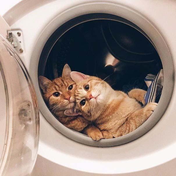 Γάτες που... κάνουν τα δικά τους! #66 (5)