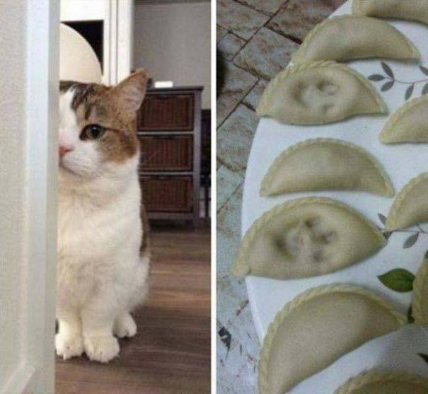 Γάτες που... κάνουν τα δικά τους! #66 (1)