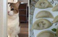 Γάτες που... κάνουν τα δικά τους! #66 (11)