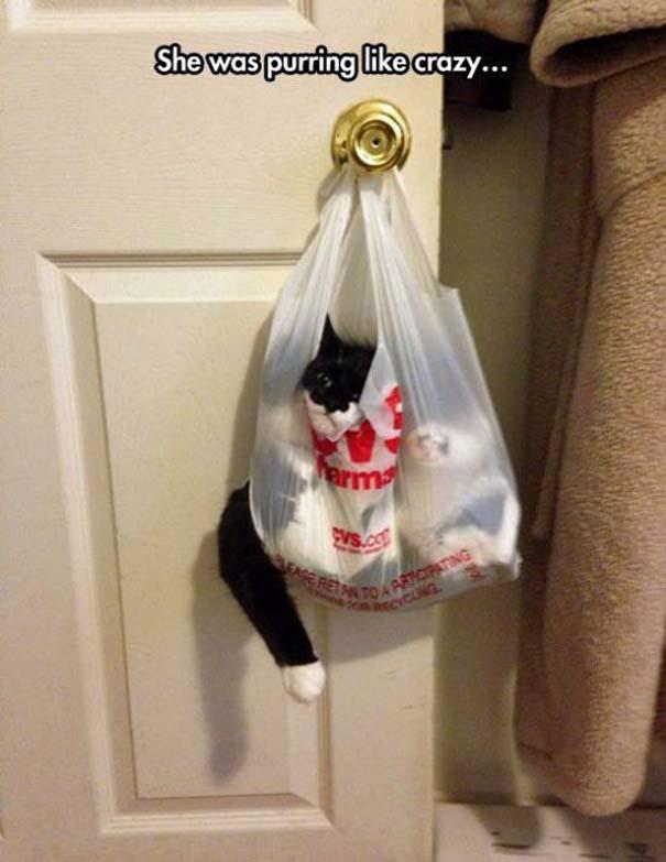 Γάτες που... κάνουν τα δικά τους! #67 (4)