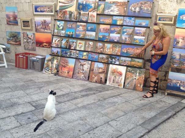 Γάτες που... κάνουν τα δικά τους! #67 (5)