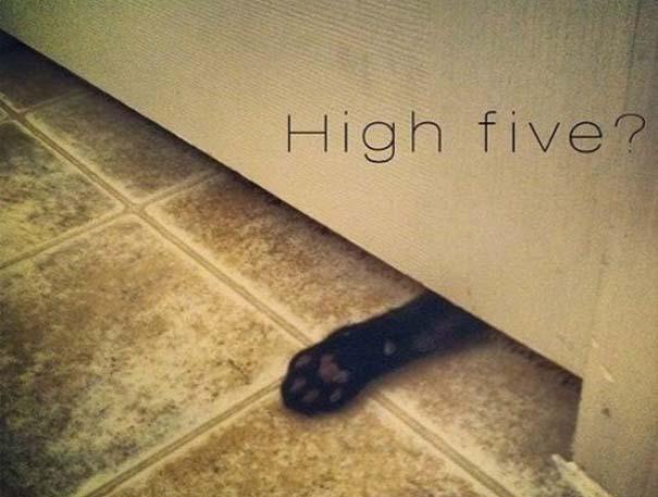 Γάτες που... κάνουν τα δικά τους! #66 (6)