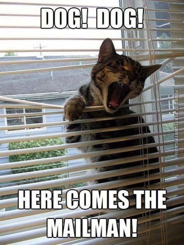 Γάτες που... κάνουν τα δικά τους! #66 (7)
