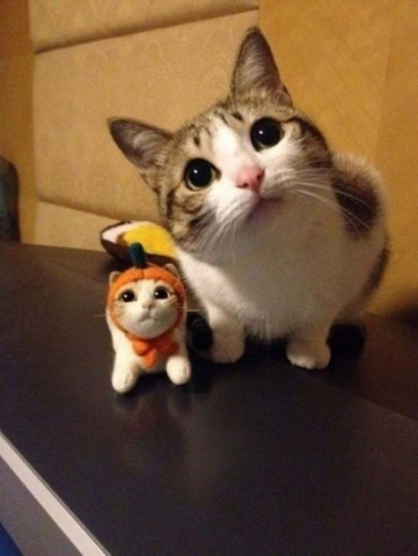 Γάτες που... κάνουν τα δικά τους! #66 (9)