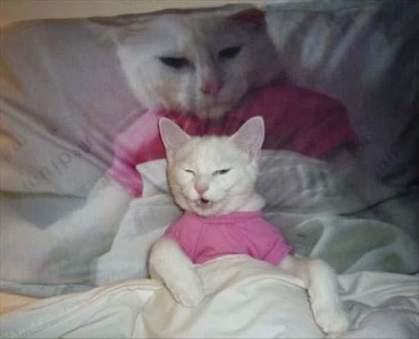Γάτες που... κάνουν τα δικά τους! #66 (10)