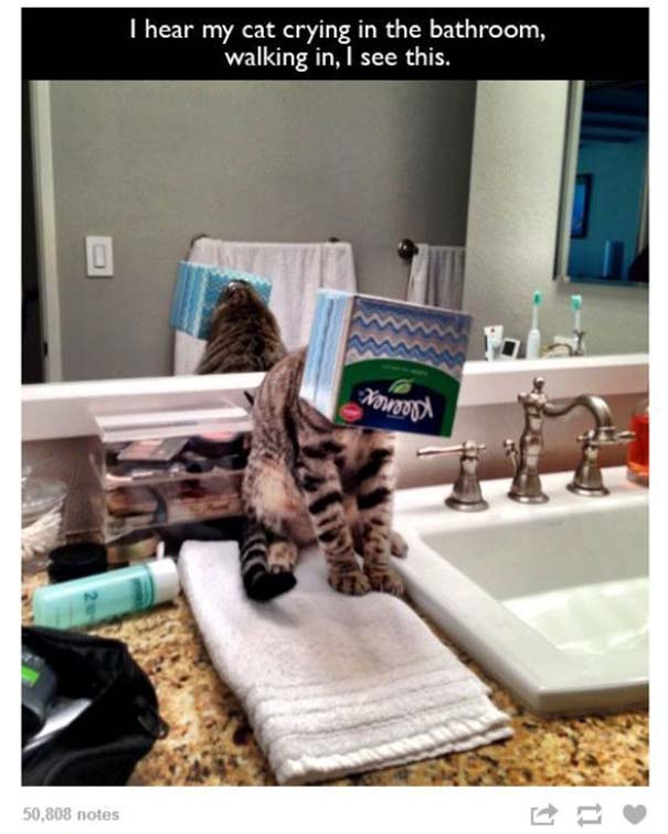 Γάτες που... κάνουν τα δικά τους! #67 (8)
