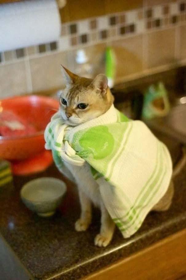 Γάτες που... κάνουν τα δικά τους! #67 (9)