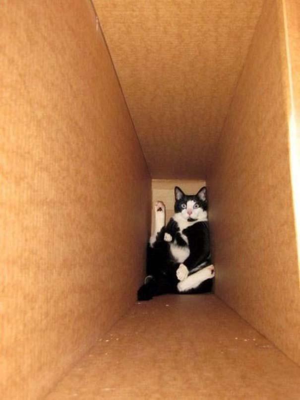 Γάτες που... κάνουν τα δικά τους! #68 (9)