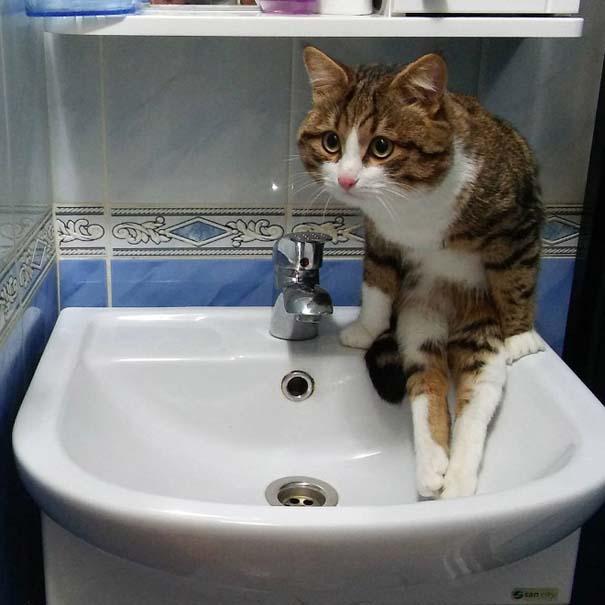 Γάτες που έχουν ξεχάσει πώς να κάθονται (1)