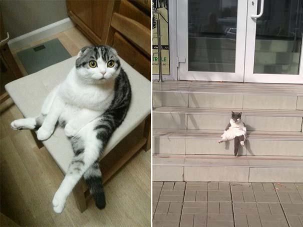 Γάτες που έχουν ξεχάσει πώς να κάθονται (4)