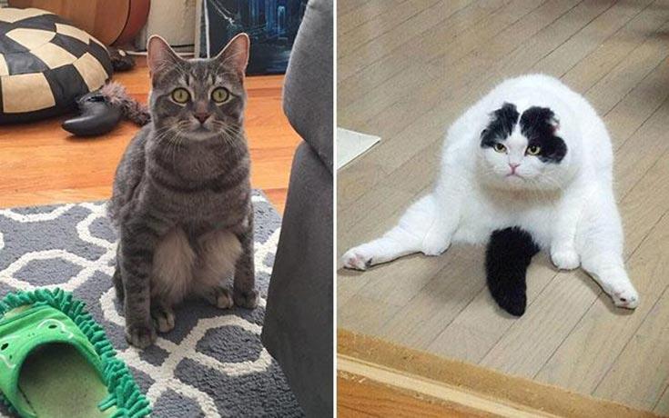 Γάτες που έχουν ξεχάσει πώς να κάθονται (6)