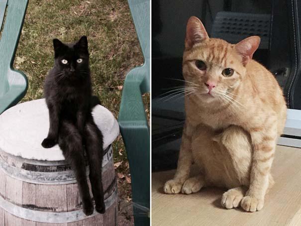 Γάτες που έχουν ξεχάσει πώς να κάθονται (8)