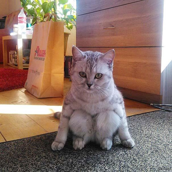 Γάτες που έχουν ξεχάσει πώς να κάθονται (9)