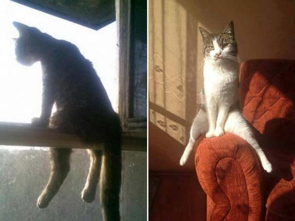 Γάτες που έχουν ξεχάσει πώς να κάθονται (10)