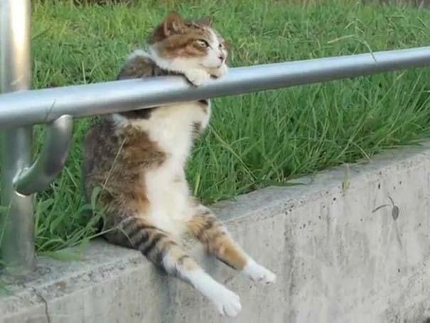 Γάτες που έχουν ξεχάσει πώς να κάθονται (11)