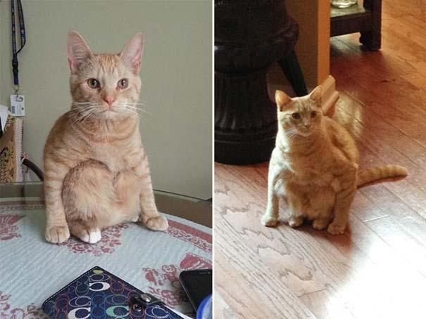 Γάτες που έχουν ξεχάσει πώς να κάθονται (13)