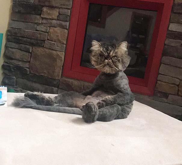 Γάτες που έχουν ξεχάσει πώς να κάθονται (15)