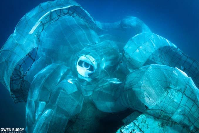Αυτό το γιγαντιαίο χταπόδι θα βοηθήσει στη δημιουργία ενός τεχνητού κοραλλιογενή υφάλου (6)