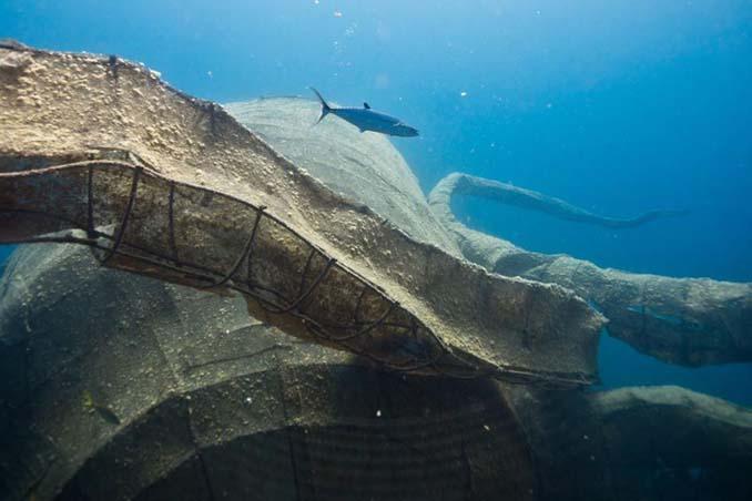 Αυτό το γιγαντιαίο χταπόδι θα βοηθήσει στη δημιουργία ενός τεχνητού κοραλλιογενή υφάλου (7)