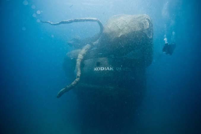 Αυτό το γιγαντιαίο χταπόδι θα βοηθήσει στη δημιουργία ενός τεχνητού κοραλλιογενή υφάλου (12)