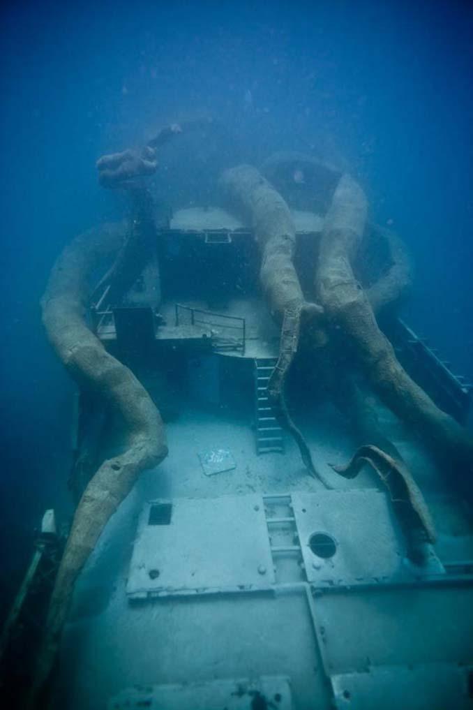 Αυτό το γιγαντιαίο χταπόδι θα βοηθήσει στη δημιουργία ενός τεχνητού κοραλλιογενή υφάλου (14)
