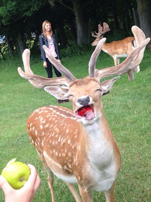 Ξεκαρδιστικές φωτογραφίες ζώων που δεν έχουν ίχνος φωτογένειας (1)