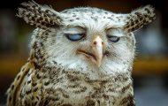 Ξεκαρδιστικές φωτογραφίες ζώων που δεν έχουν ίχνος φωτογένειας (2)
